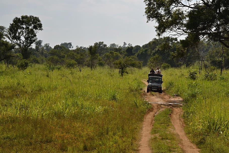 Things-to-do-in-Sri-Lanka-Safari-jeep