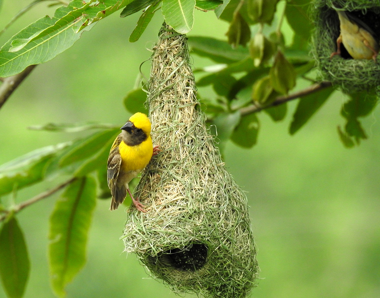 Shraavana,-the-Season-of-Ecstasy-for-Wildlife-Baya-Weaver