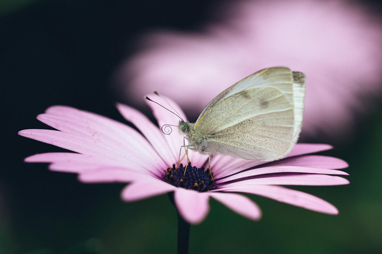 Fluttering-Wonders