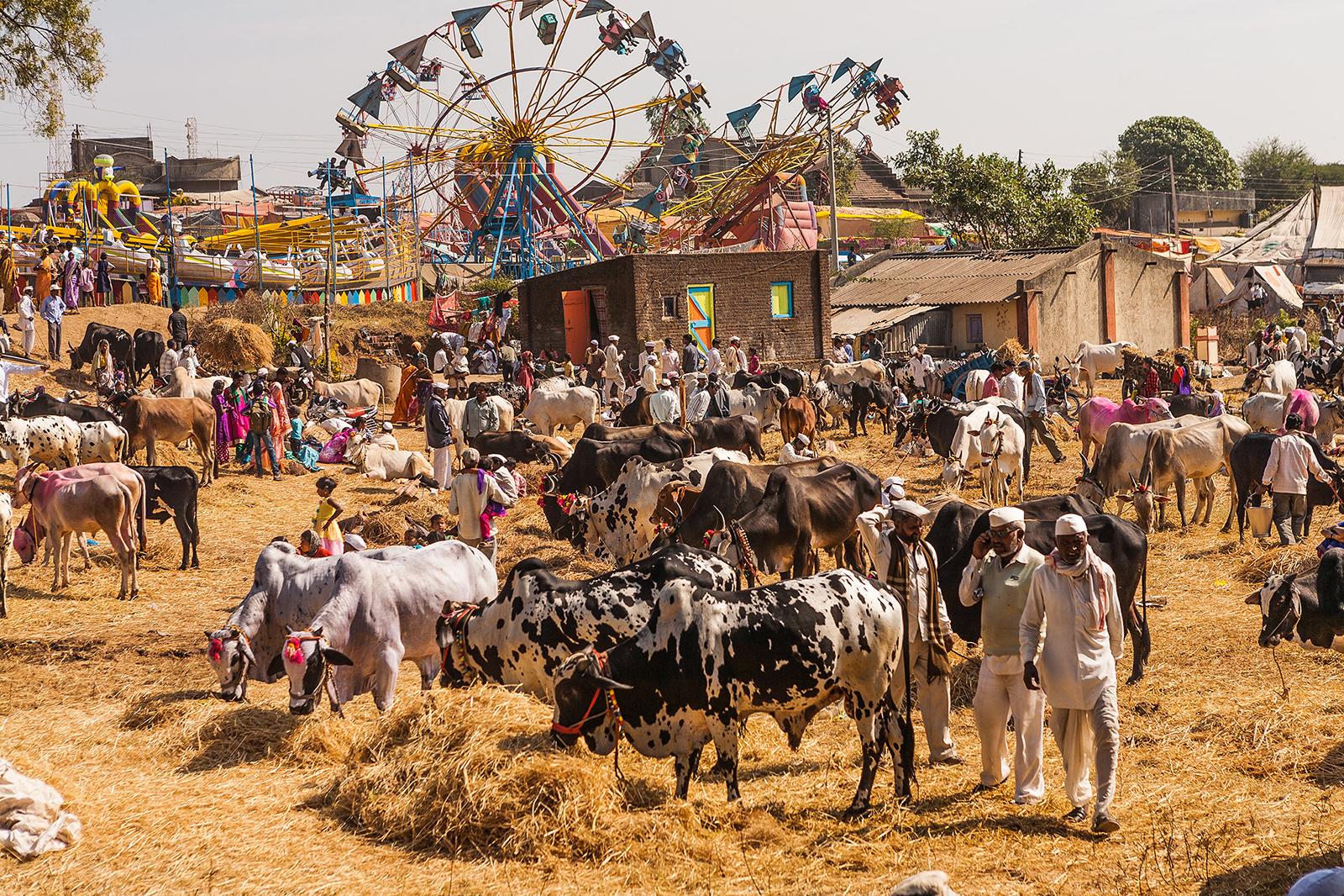 Occupation inMaharashtra