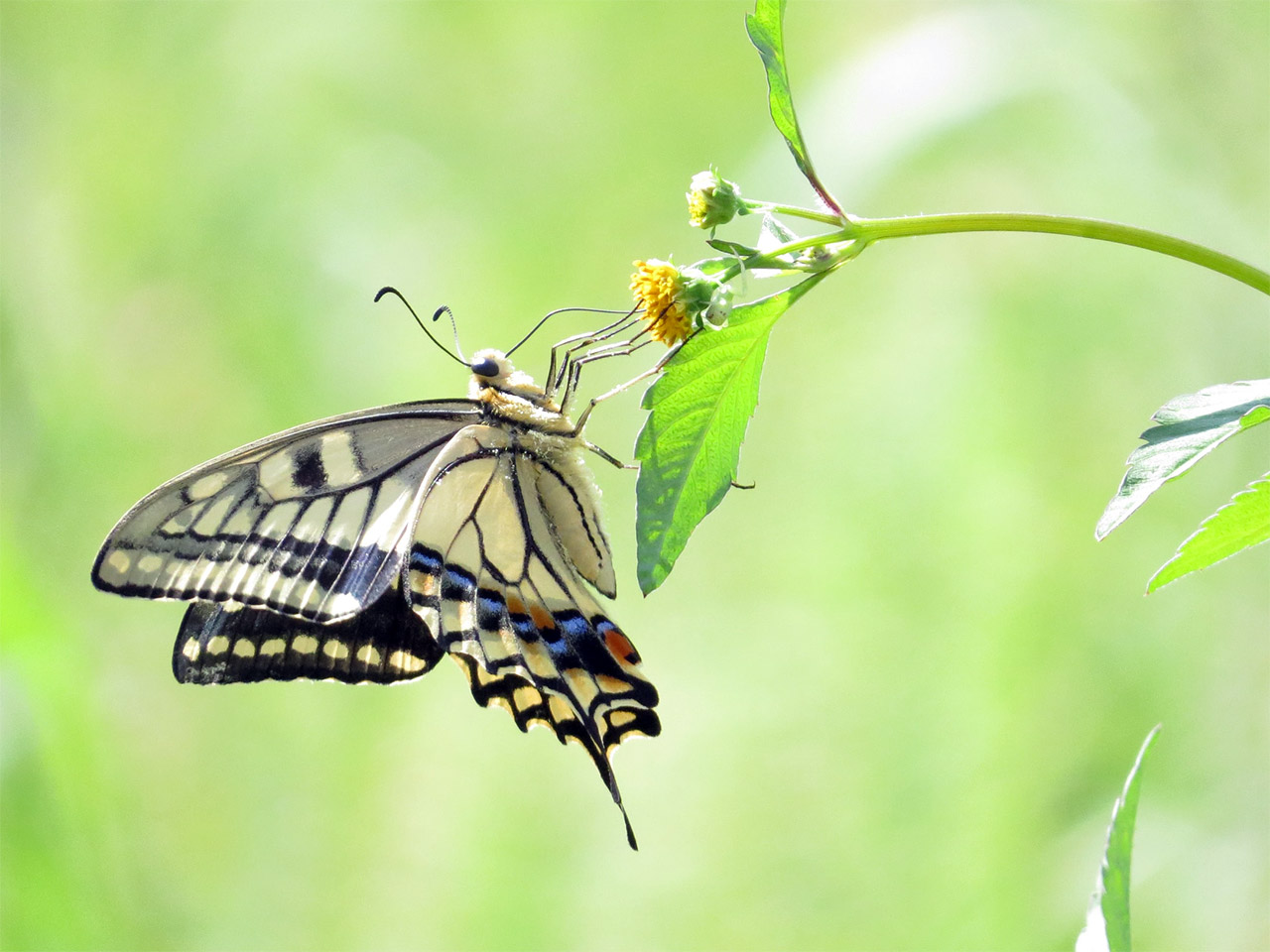 Secrets-of-butterfly