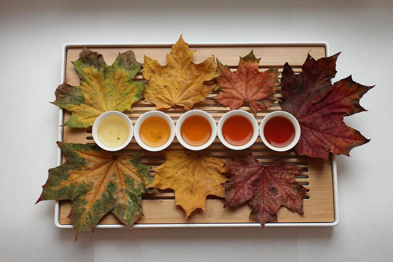 7-Types-of-Tea-in-India-Darjeeling-Tea