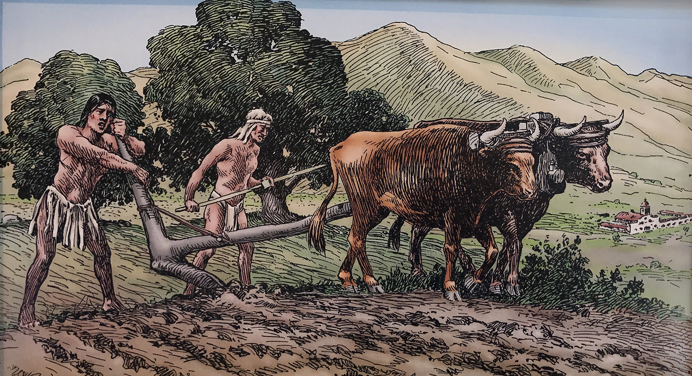 The-History-of-Agriculture