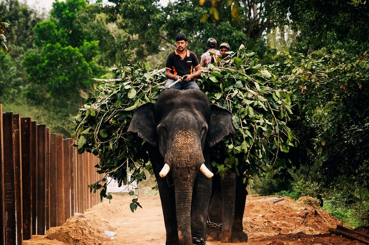 Trip-to-Coorg-11