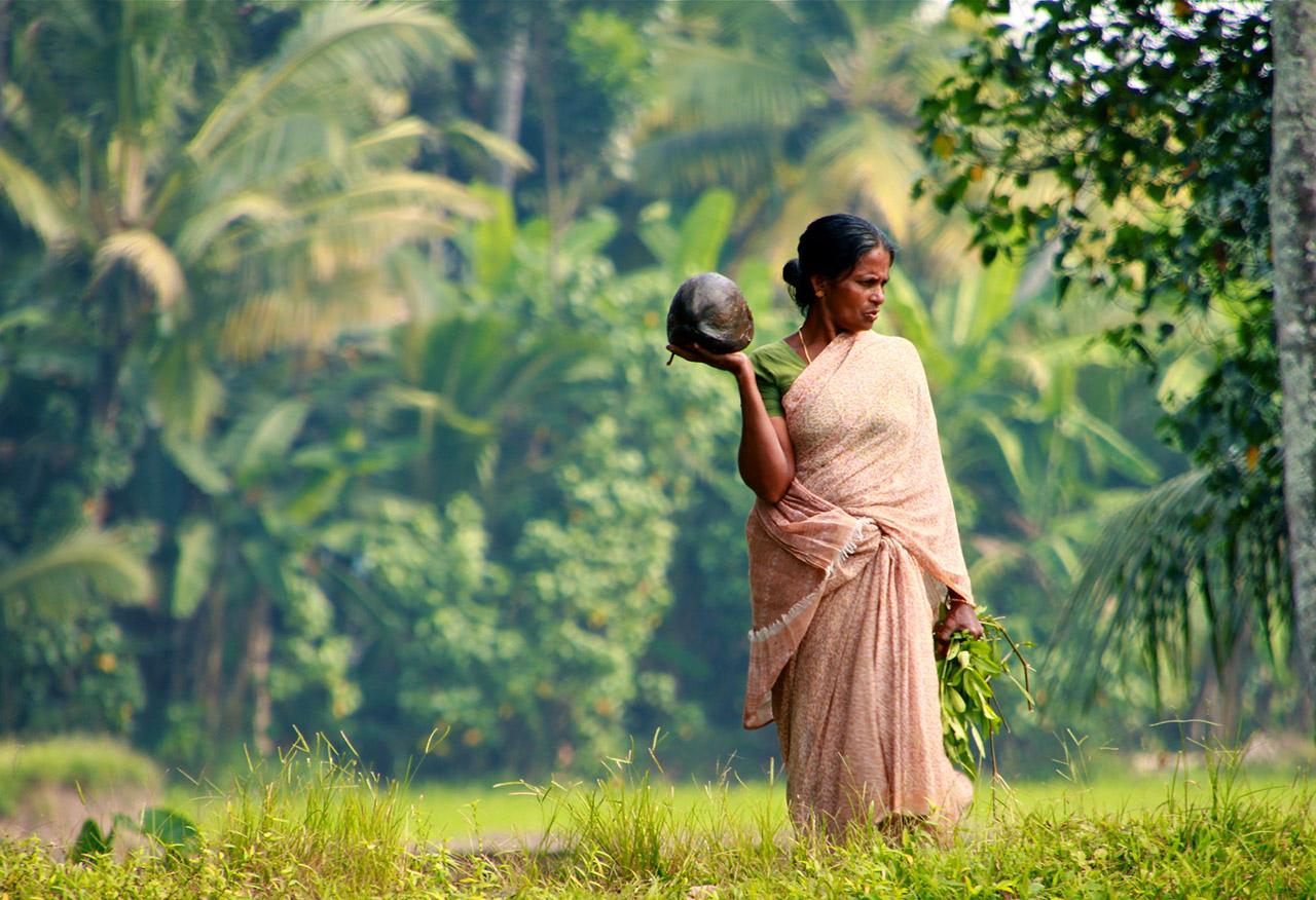 Coconut-culture