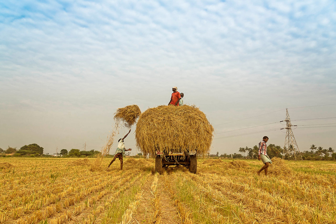 Harvest-Festivals-of-India-Crop-Cycle