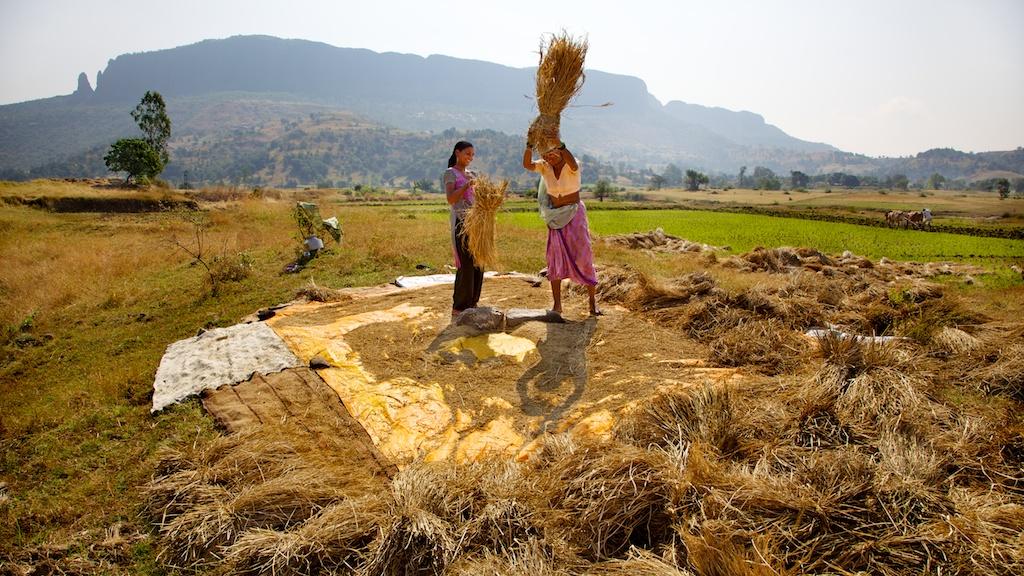The-philosophies-Harvesting-Festivals-of-India