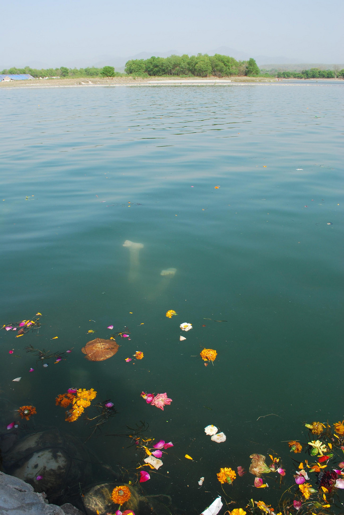 ganga pollution