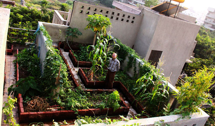 Vegetables can be grown not in the garden, but in a bottle. The pensioner made a chic vegetable garden on the balcony 25